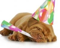 fødselsdagbillede-21