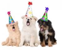 fødselsdagbillede-31